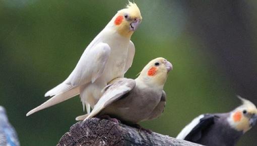 นกสัตว์ที่อยู่คู่กับคนไทยมานาน