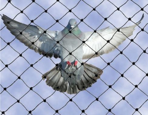 ประตูตาข่ายกันนกพิราบ