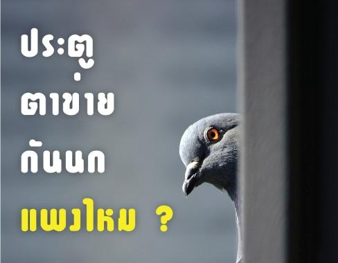 ประตูตาข่ายกันนกแพงไหม